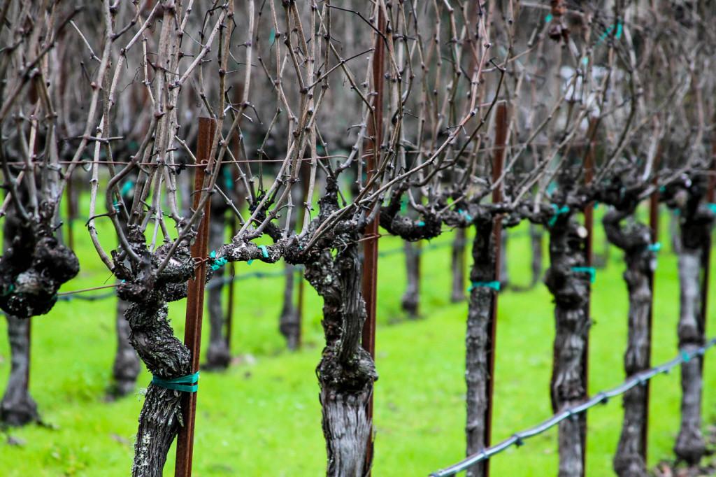 WineryExplorers004