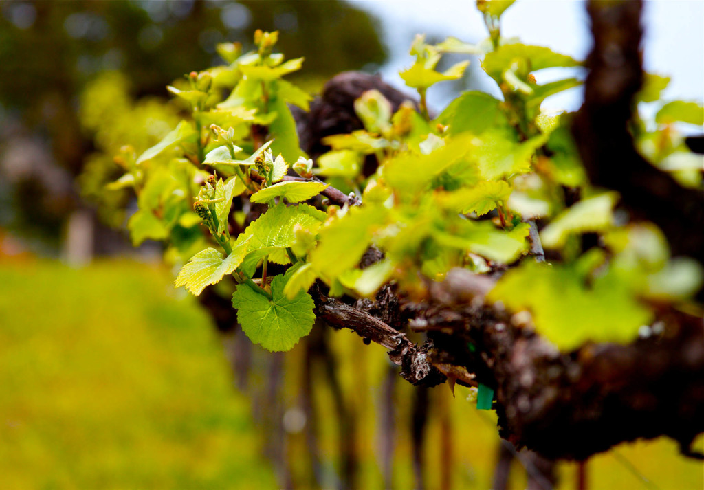 WineryExplorers016