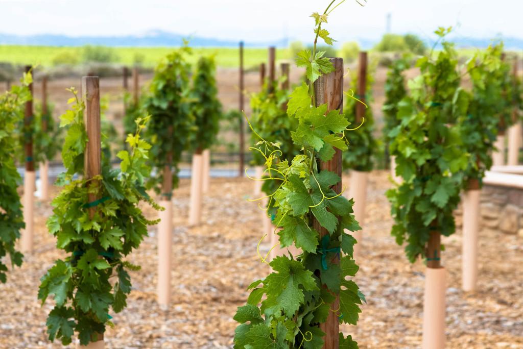 WineryExplorersLorimar02
