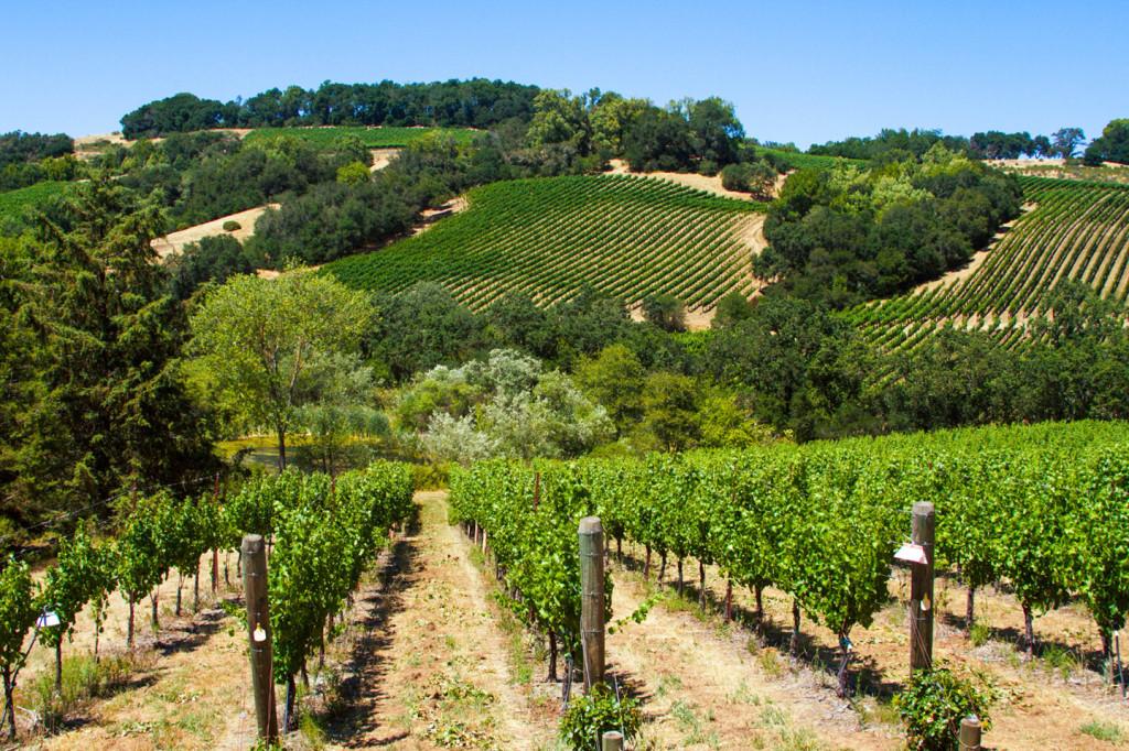 WineryExplorers11
