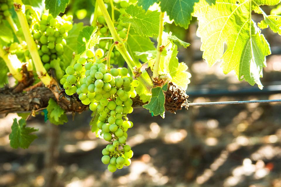WineryExplorersRusack13