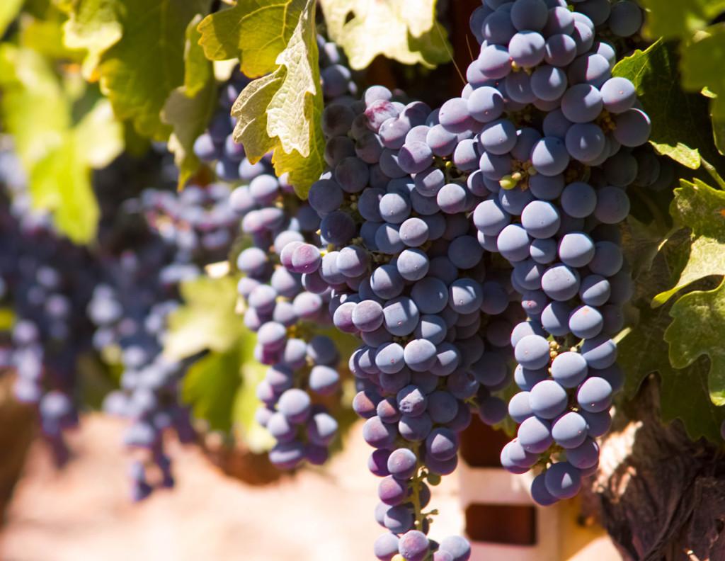 WineryExplorersL'Aventure07