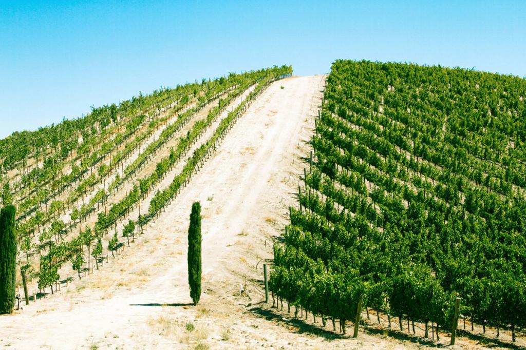 WineryExplorersL'Aventure08