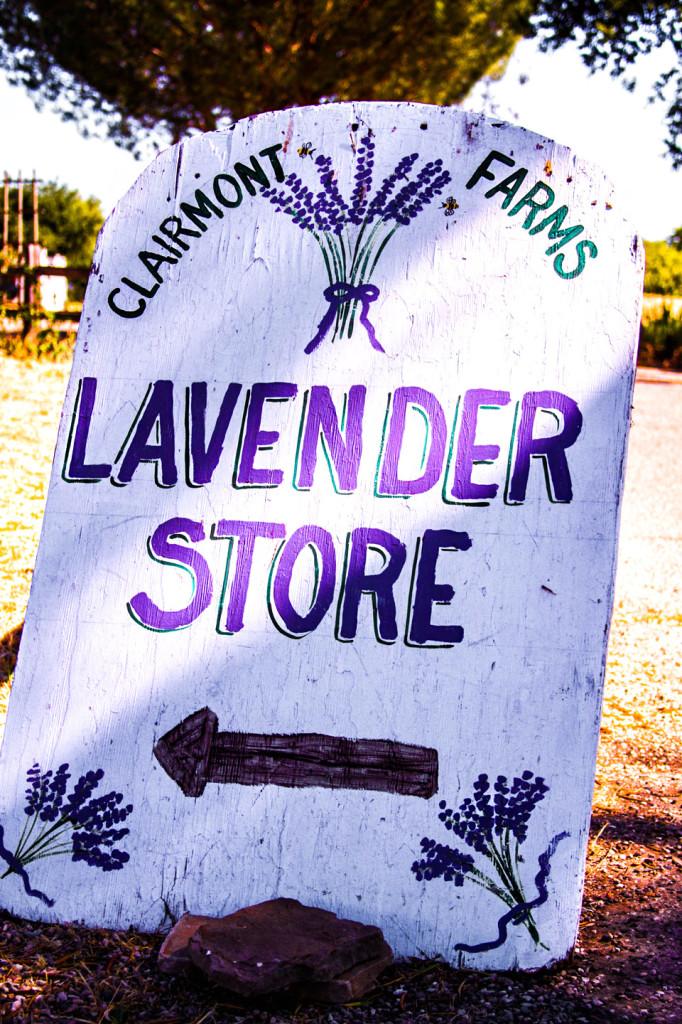 WineryExplorersLavender05