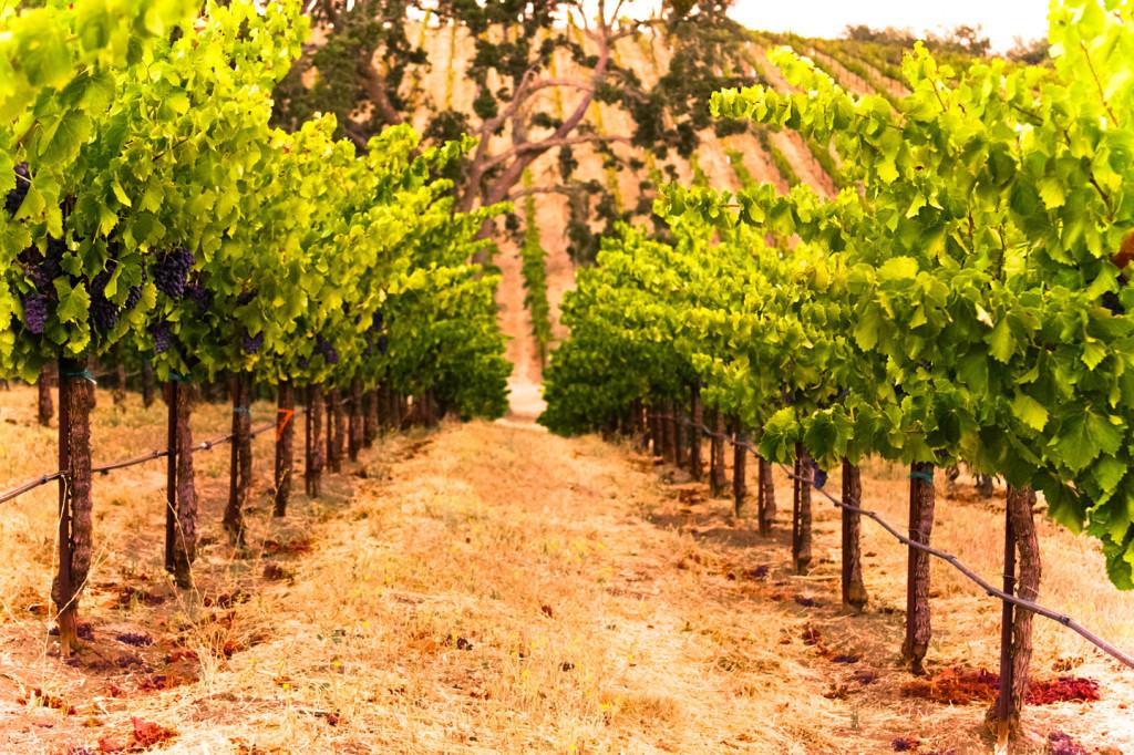 WineryExplorersDenner7